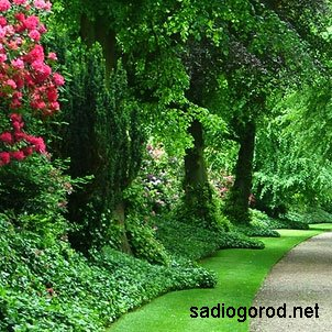 Здоровый сад – залог успеха
