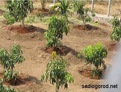Время для посадки деревьев