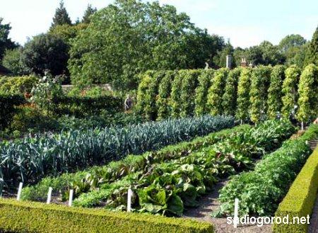 Советы по планировке декоративного огорода