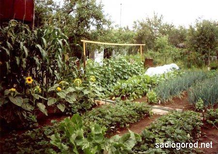 Системы очистки воды для вашего огорода