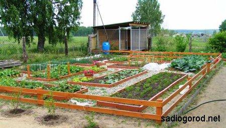 Семена для огорода