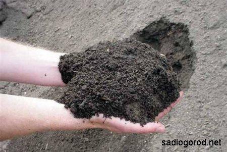 Определяем влажность  грунта