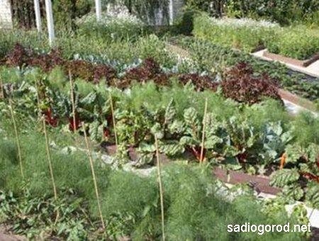 Правильное чередование культур на огороде