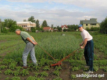 Заработок в огороде